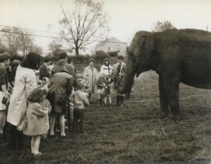 Feeding the Elephants, 1970